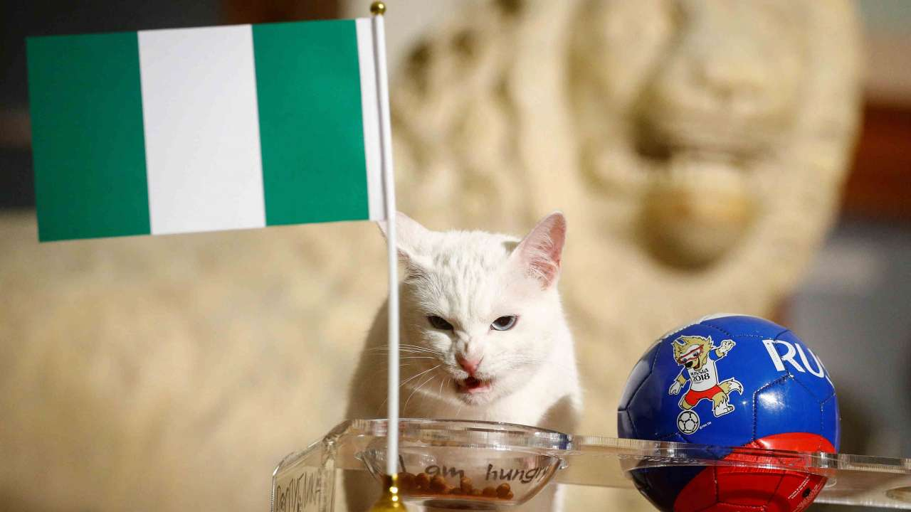 Photo of Chinese cat that predict the defeat of Nigeria, see what happen next