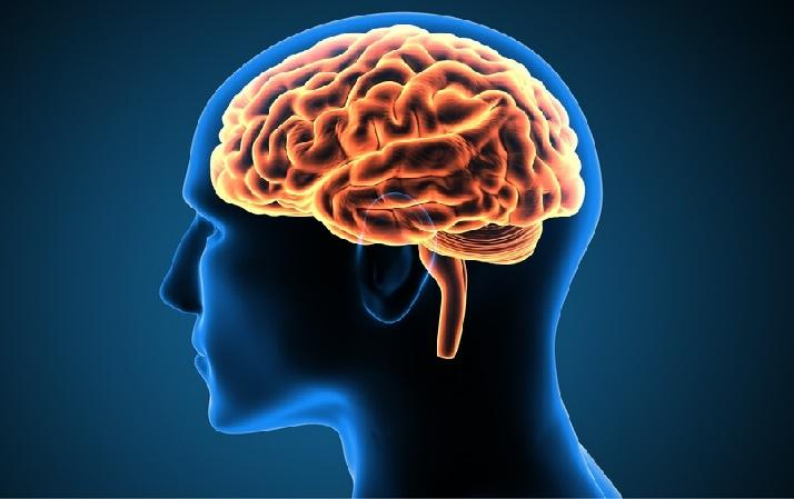 The mystery of the brain: a human ability that can not be explained 1