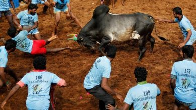 Two deaths in traditional bullfighting in India 6