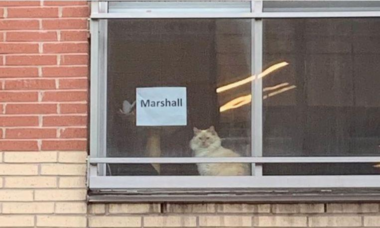 Story of an office girl and white adjacent cat behind window 2