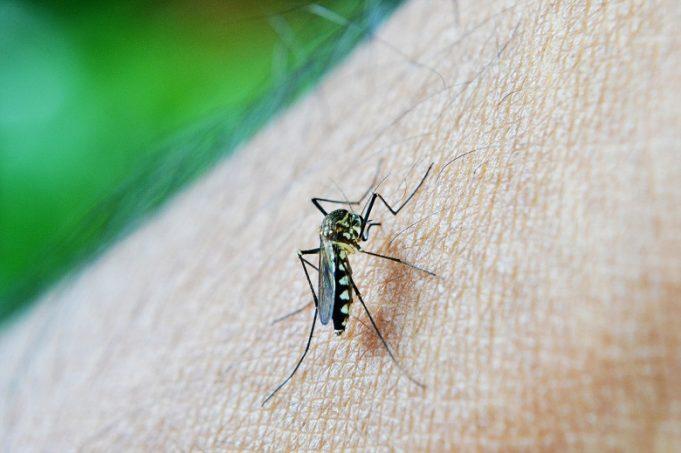 Algeria rid of malaria