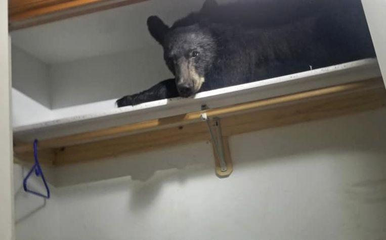 Bear in closet taking nap but look disdain after police open door