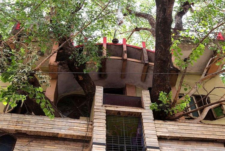 Home constructed around two trees in India [photos]
