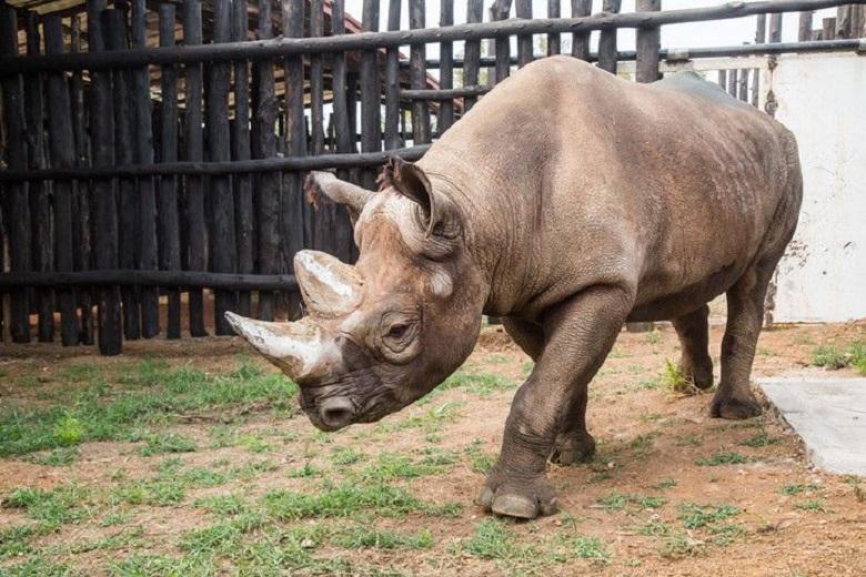Five black rhinos deployed to raise population in Rwanda