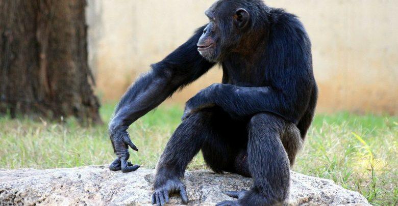 "Photo of Reagan described Africans at the UN as ""monkeys"""