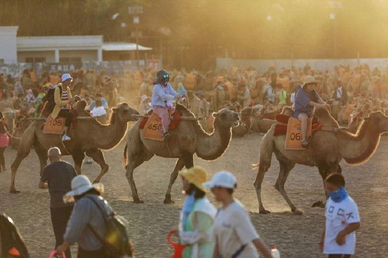 Traffic jams in the desert for 'romantic camel ride'