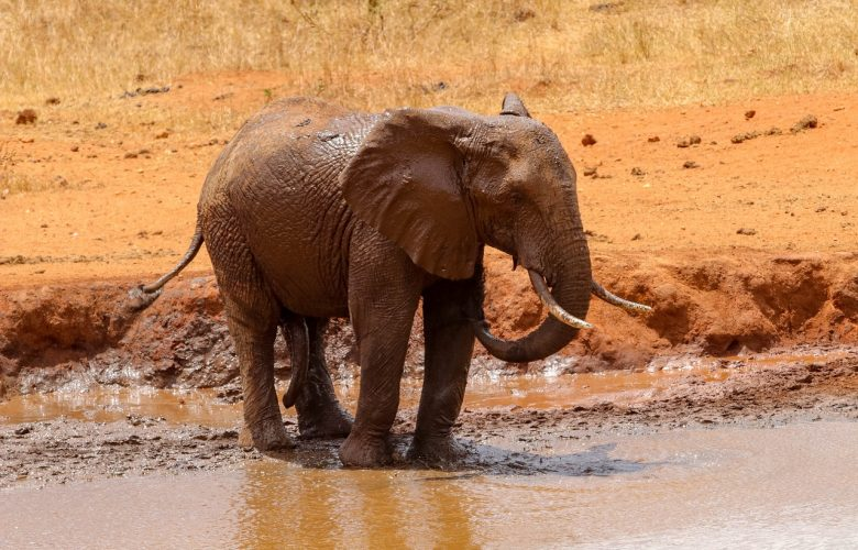 Flood affects wildlife park in Kenya: at least 7 dead, including tourists