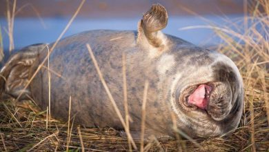Funniest side of animals: with which nominee do you laugh the loudest?