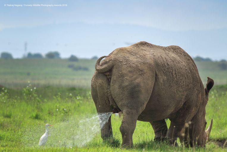 comedy wildlife photography award