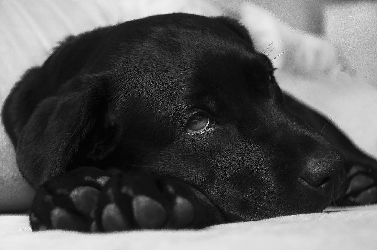 Doctor recommends 14 days leave for employee due to his sick dog