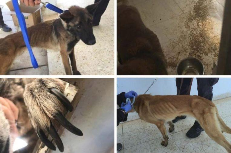 The US deployed bomb-sniffing dogs to Jordan horribly abused