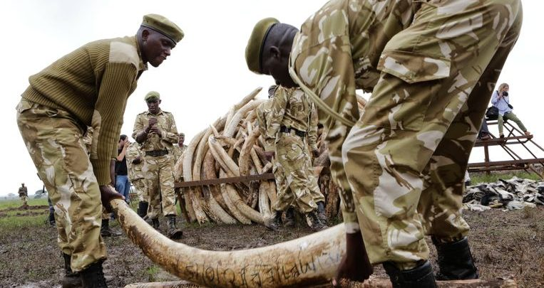 Photo of Tanzania arrests man in possession of 338 pieces of elephant tusks
